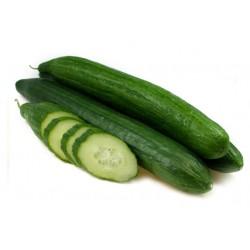 Дъргоплодна краставица  - Saladin  F1