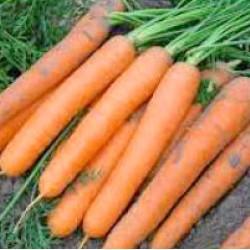 Хибридни моркови JULIA F1