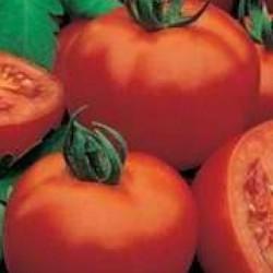 Детерминантен домат    -    Mona Lisa F1