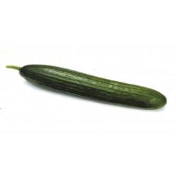 Дългоплодна краставица OR- 5031 F1