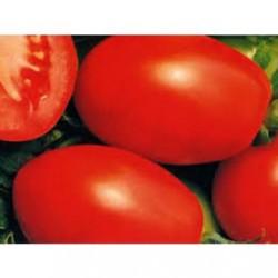 Детерминантен  консервен домат RIO GRANDE