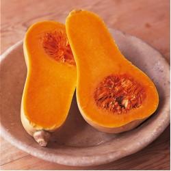 Тиква Pumpkin Buternut